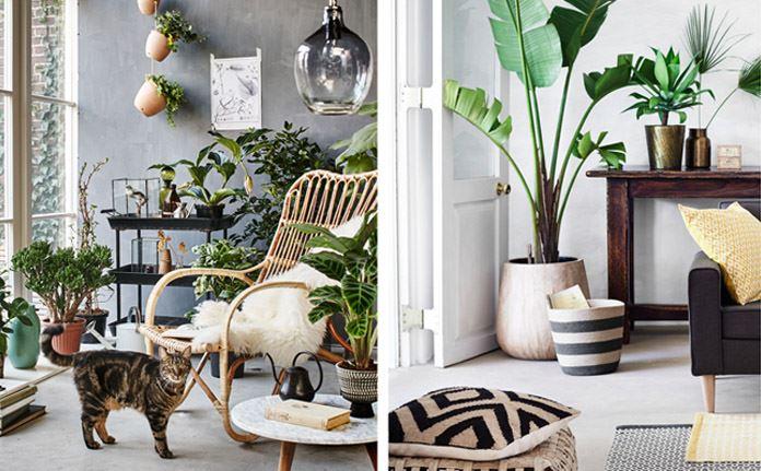 Migliori Piante Da Appartamento.Le Migliori Piante Da Appartamento Per Arredare Casa